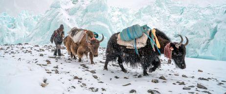 Banff Mountainfilm-Festival: Das große Draußen jetzt auf Tour