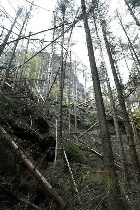 Aktuelle Lage: Unterwegs in den Wäldern der Sächsischen Schweiz